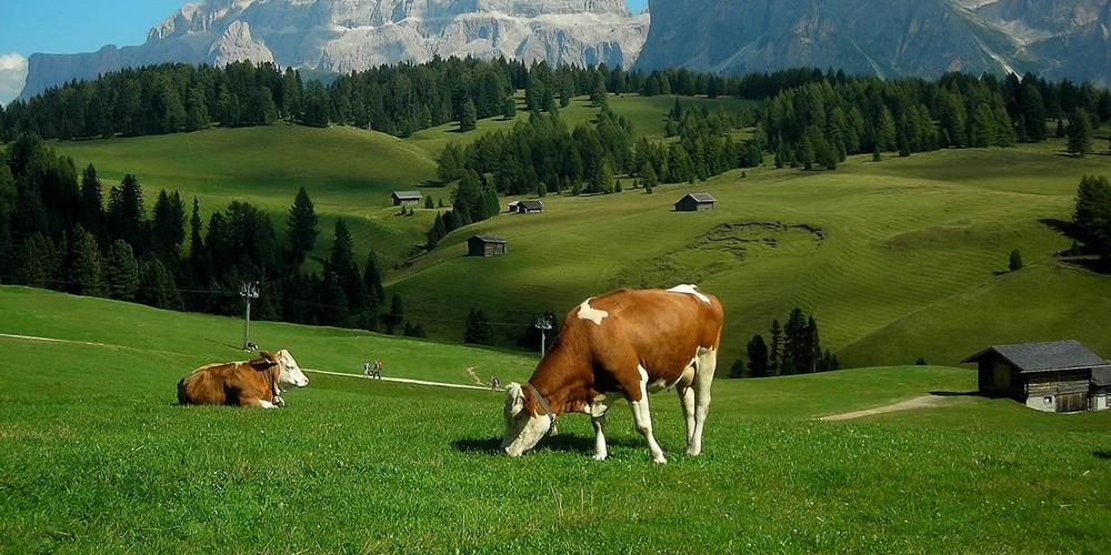 Tarım Besicilik ve Hayvancılık